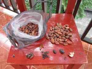 6 cacao 2