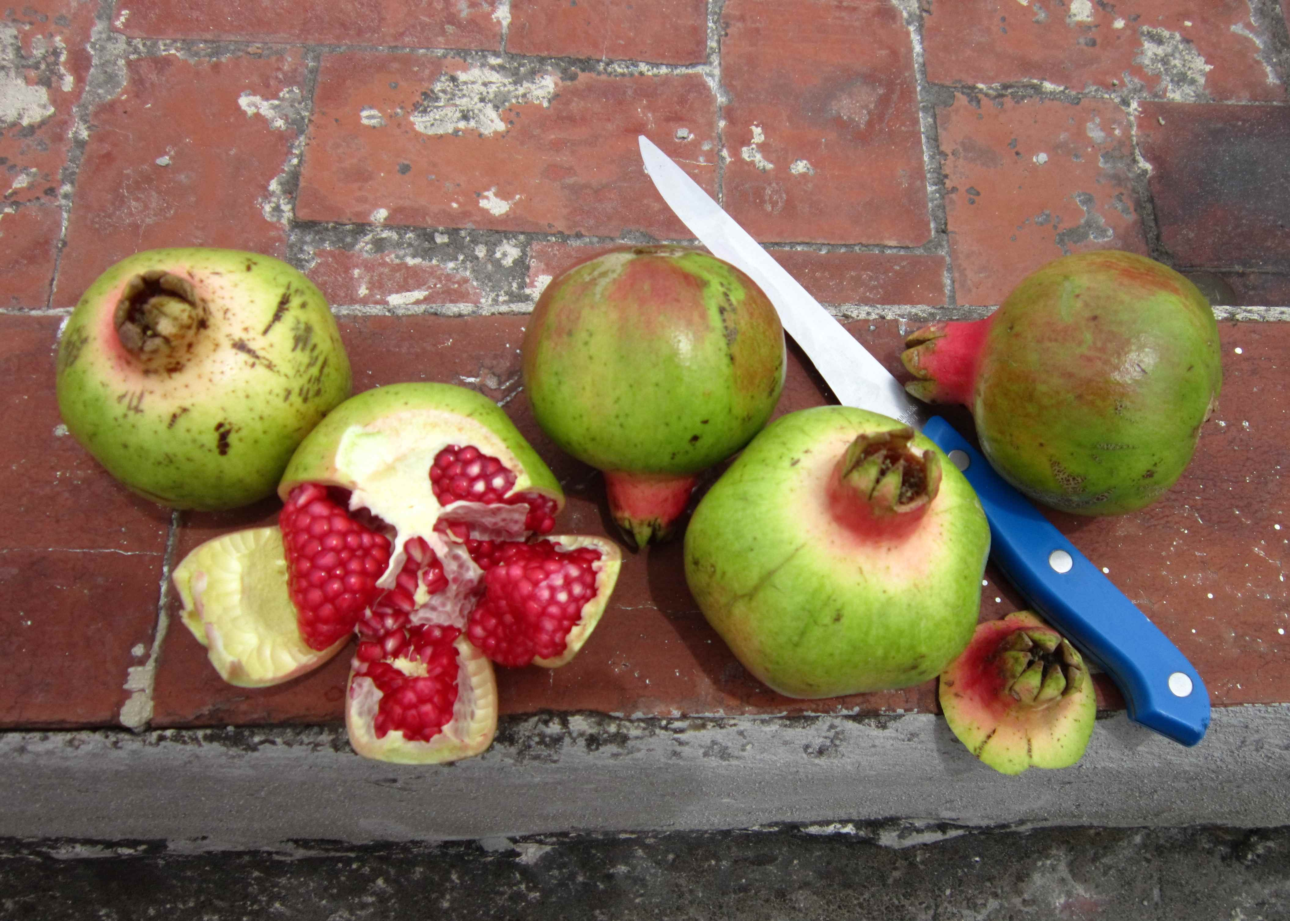 a guide to fruit in mexico and how to eat it no hay bronca