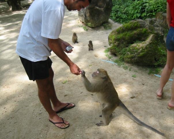 tip 10 thailand monkey