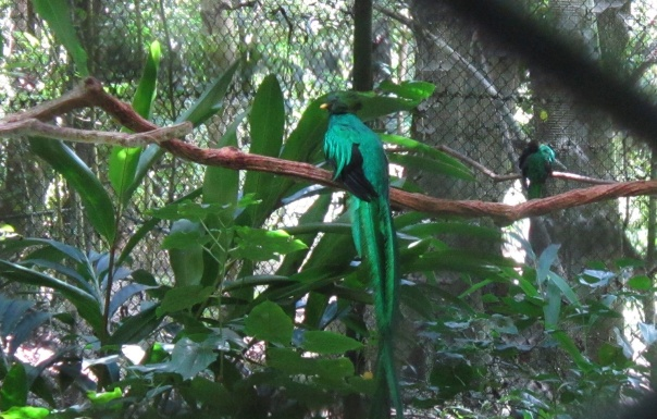 quetzal NHB