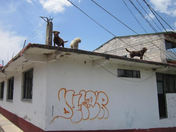 dogs-on-roof